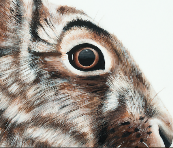 Rabbit art print detail