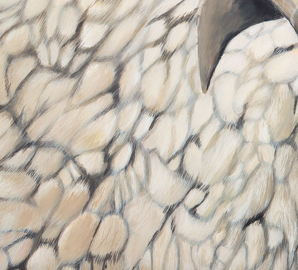 NZ sheep painting wool detail