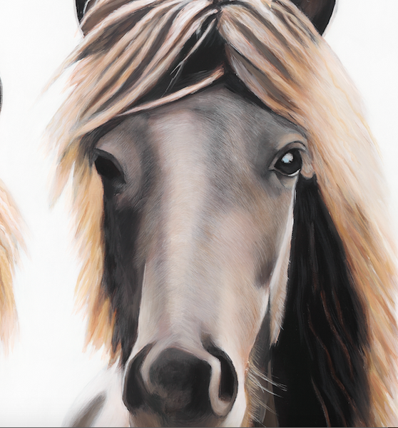 horse head  close up detail , brown horse, fine art print