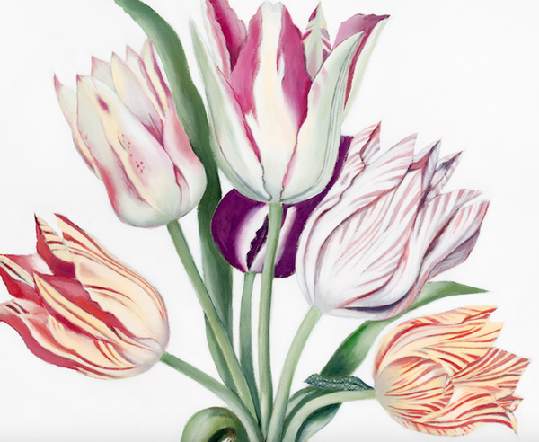 Tulips in Galle Cameo Vase Art Print