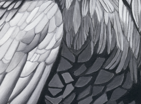 The crows portrait, close up detail of feather pattern and design