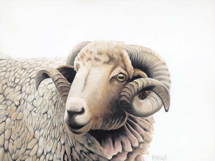 NZ sheep painting acrylic on canvas, sheep portrait
