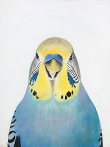 budgie art print  blue budgie art print , colourful budgies for your home