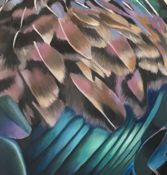 feather detail, New Zealand  native Tui