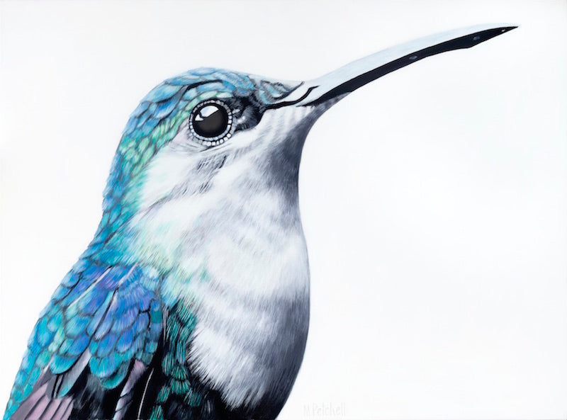 hummingbird art print , detailed portrait