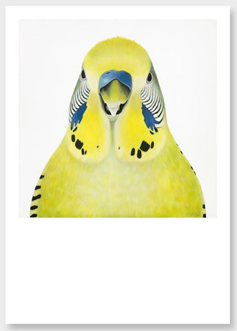 green budgie art print, quirky friendly budgie portrait, bird art print