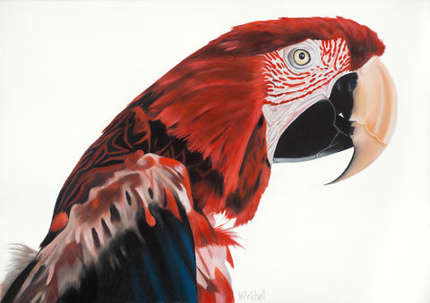 red macaw parrot, bird portrait, red feathers,