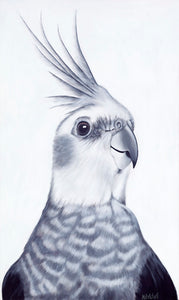 cockatiel art print, parrot portrait in black and white , new zealand bird artist