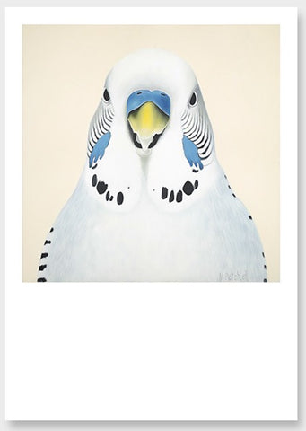 white budgie art print , bird art for you wall by new zealand artist specailizing in bird portraits