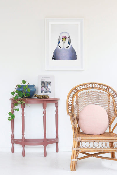 sylvia budgie framed  art print  on the wall