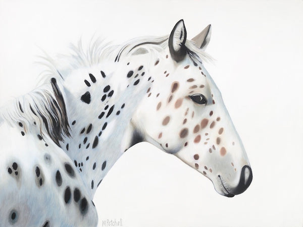 Appaloosa, black and white spotted horse fine art print