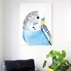 large budgie art print on the wall, dramatic bird portrait