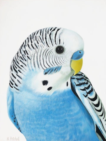 blue budgie art print, Wilbur. budgie portrait picture, art for your home