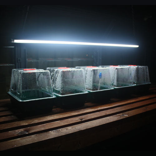 Sunblaster Grow Light
