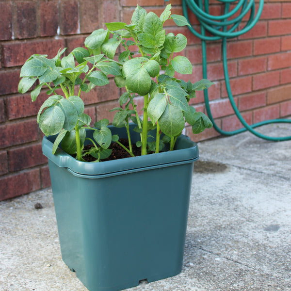 Potato Pots