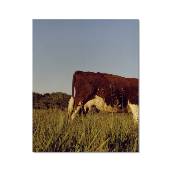 """Cow Grazing"" By Will Turner"