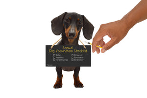 The Dangers of Over-Vaccinating Your Dog