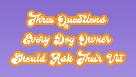 Three Questions Every Dog Owner Should Ask Their Vet