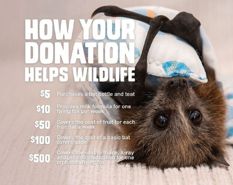 how your donations help