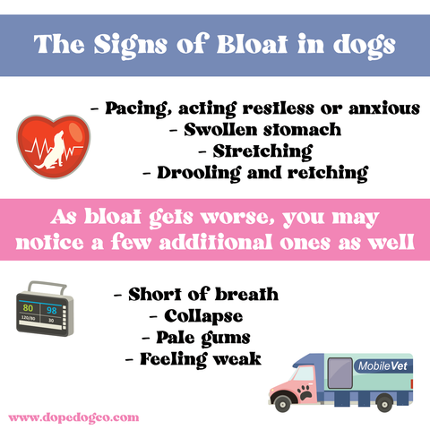 The Signs of Bloat in Dogs