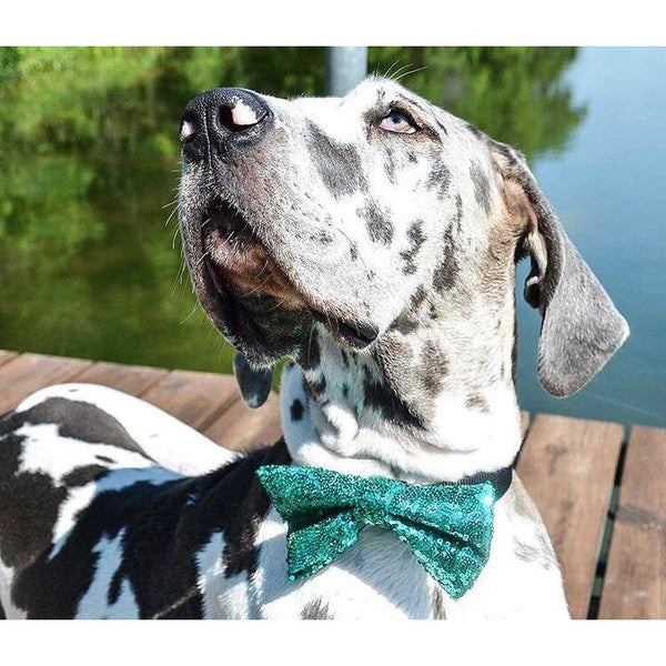 Sequin Dog Bowtie - Dope Dog Co