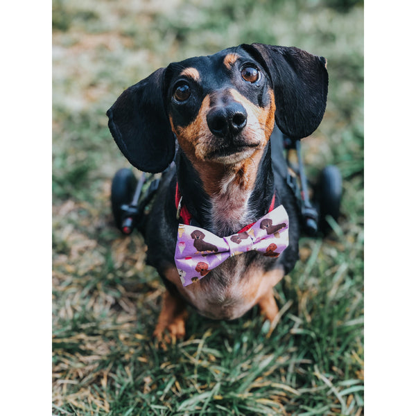 I Scream For Ice Cream Bow tie - Dope Dog Co