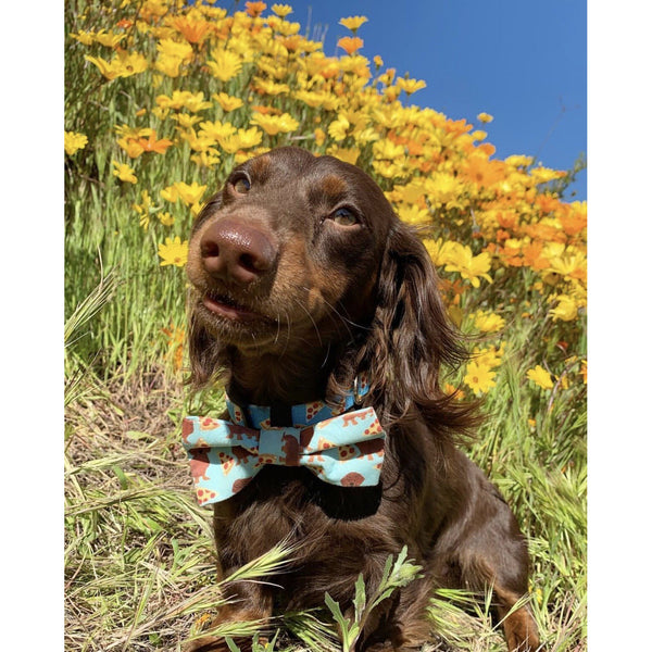 Pupperoni Pizza Bow Tie - Dope Dog Co