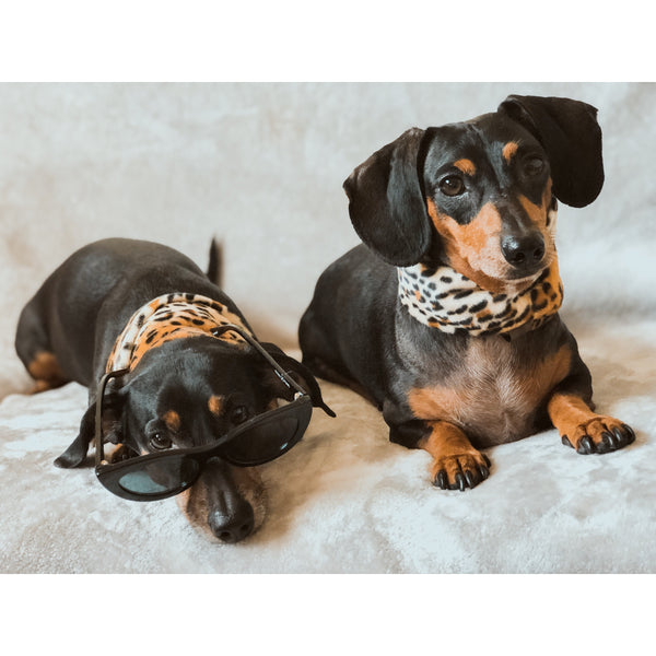 The Chelsea - Matching Dog and Owner Snoods - Dope Dog Co