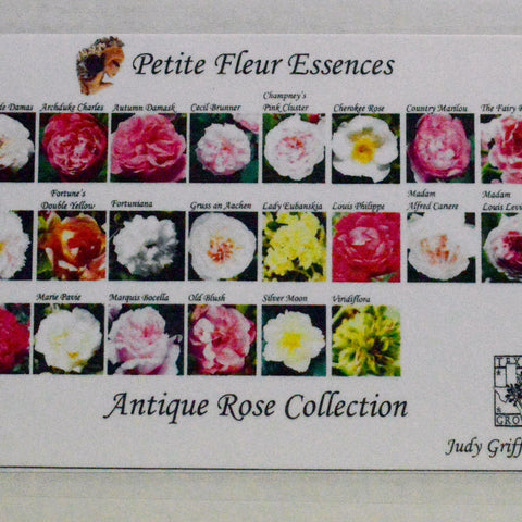 Antique Rose Collection