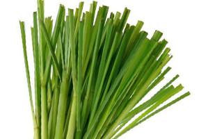 Lemongrass ,Cynbopogan citratis, Essential Oil