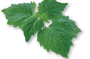 Patchouli( aged), Pogostemon patchouli, Essential Oil