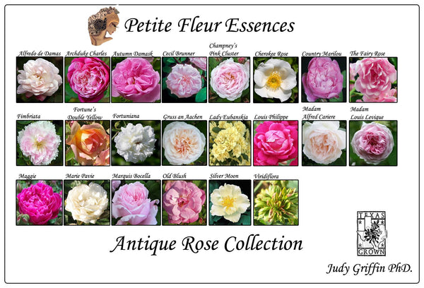 Antique Rose Collection - Aroma Health Texas