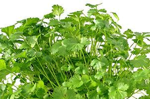 Coriander Essential Oil - Aroma Health Texas