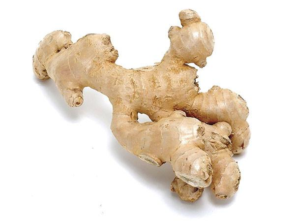 Ginger root, Zingiber officinales, Essential Oil