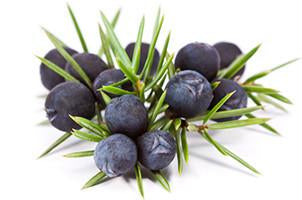 Juniper berries, Essential Oil