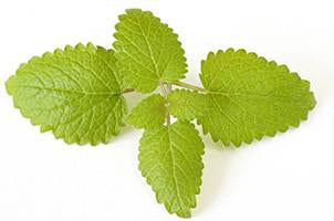 Lemon Balm, Essential Oil  Floral Water