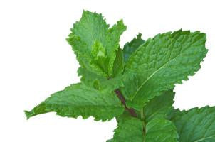 Peppermint, Mentha peperita, Essential Oil