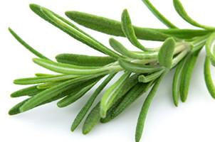 Rosemary, Rosmarius officinalis, Essential Oil