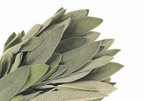 Sage, Salvia officinalis, Essential Oil
