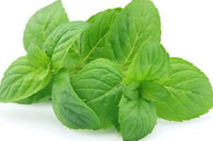 Spearmint, Mentha spicata, Essential Oil - Aroma Health Texas