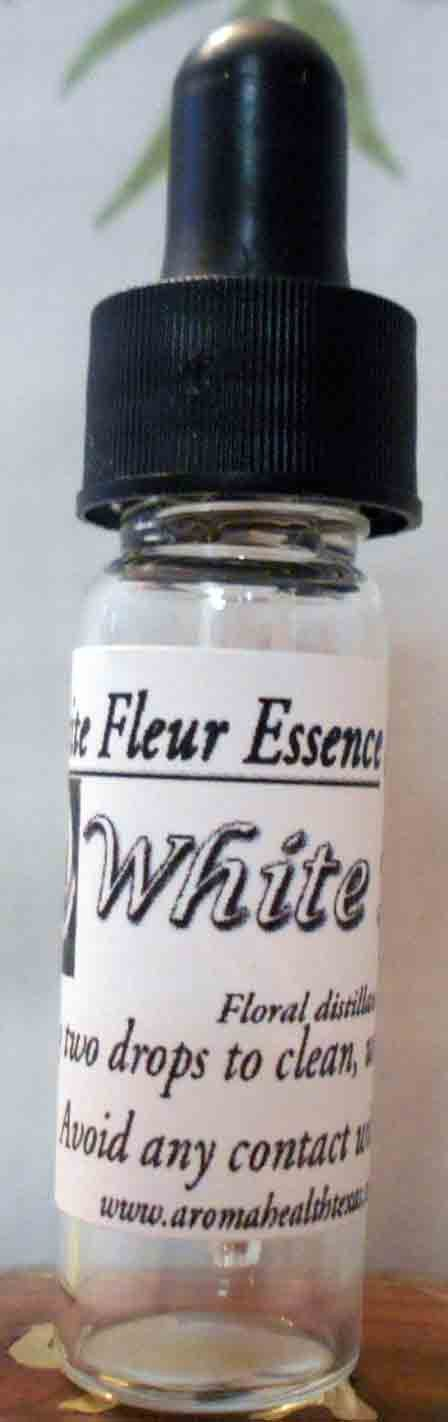 White Rose, Rosa chinensis,Flower Essence