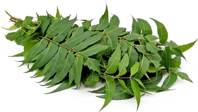 Clinical studies on the effect of Neem (Azadirachta indica) bark extract on gastric secretion and gastroduodenal ulcer.