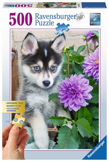Ravensburger: Cute Husky - 500pc Puzzle