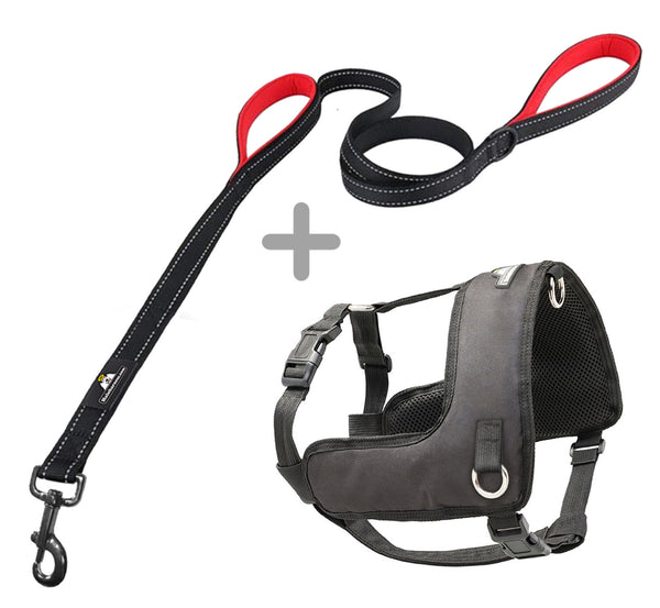 Halo Harness (Small) W/Leash Bundle