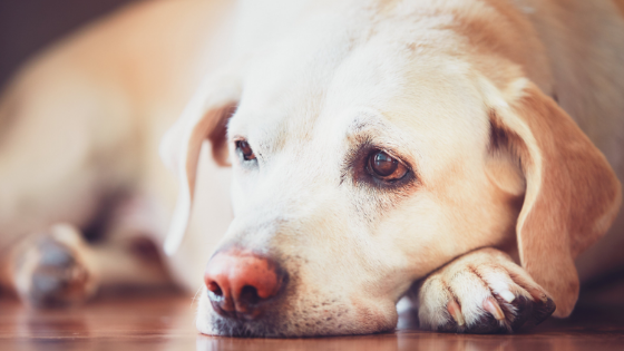 The Hidden Truth About Dog Allergies Revealed