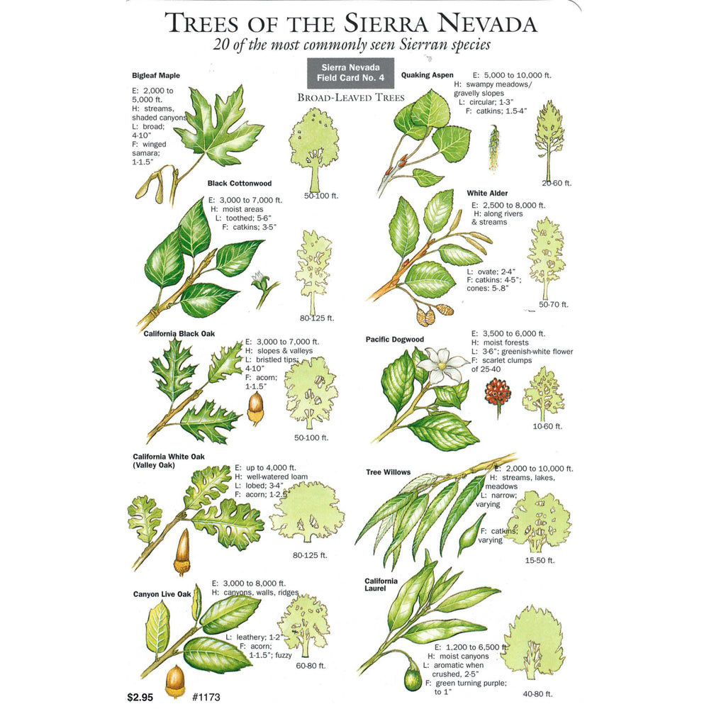 Trees of the Sierra Nevada Field Card