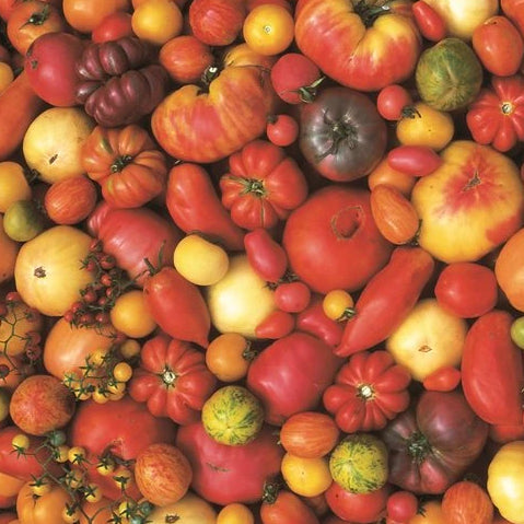 Organic Heirloom Tomatoes by the Pound -ZFG