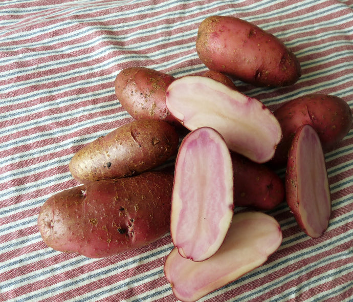 Red Thumb Potatoes