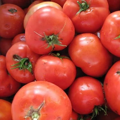 Canner Tomatoes