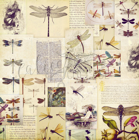 dragonfly ledger paper